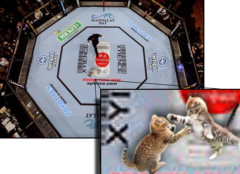 cat-fighting-octagon.jpg