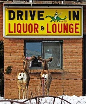 deers-heavy-drinking.jpg