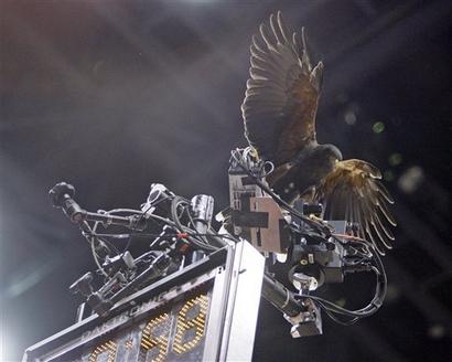spirit-the-hawk.jpg