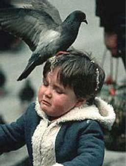 stupid-bird-shit-kid.JPG