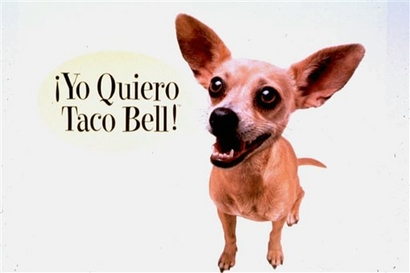 taco-bell-dog.jpg