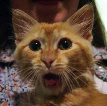 cat-shock.jpg