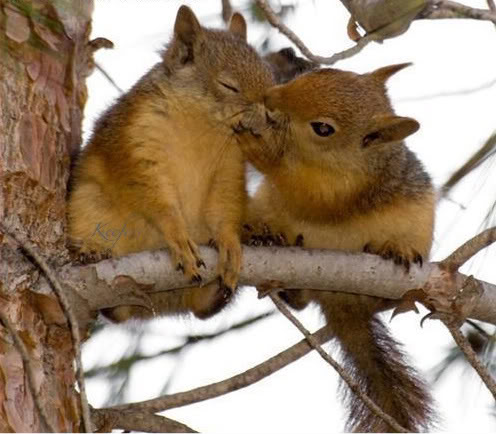 funny-pictures-kissing-squirrels-1.jpg