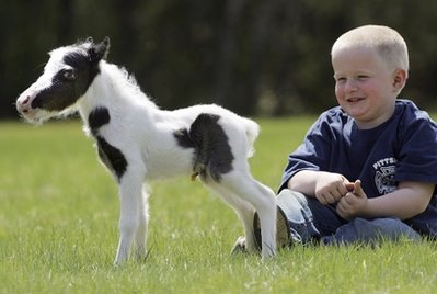 pinto-pony-with-kid.jpg