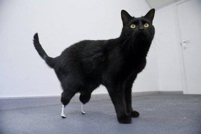 bionic-cat.jpg