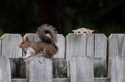 cat-eyeing-squirrel.jpg