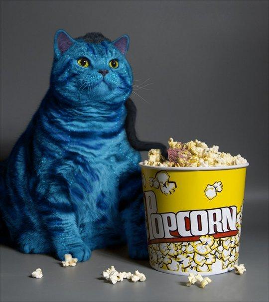 avatar-cat.jpg
