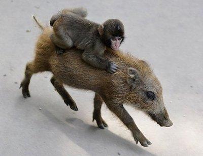 baby-money-riding-a-boar.jpg