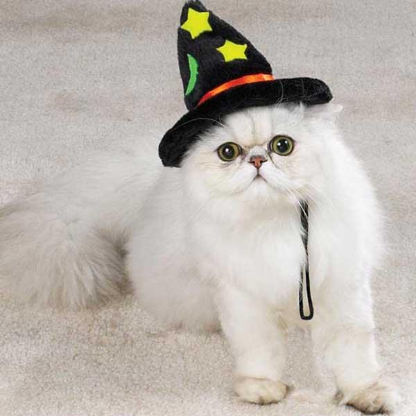 halloween-witch-cat-hat.JPG