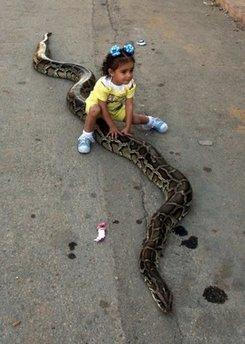 little-girl-riding-a-python.jpg