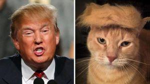 Trump cat hair